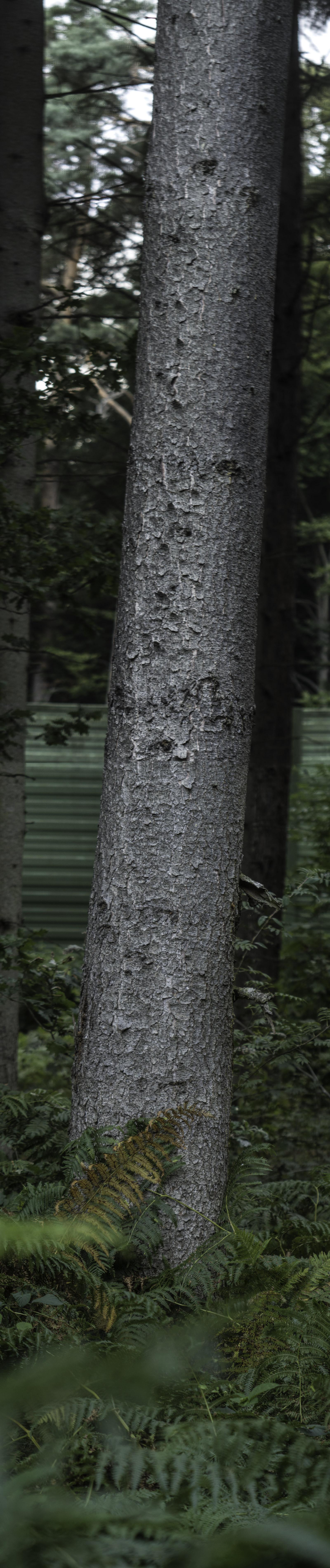 Hochkantpanorama eines Baumstamms mit Farn