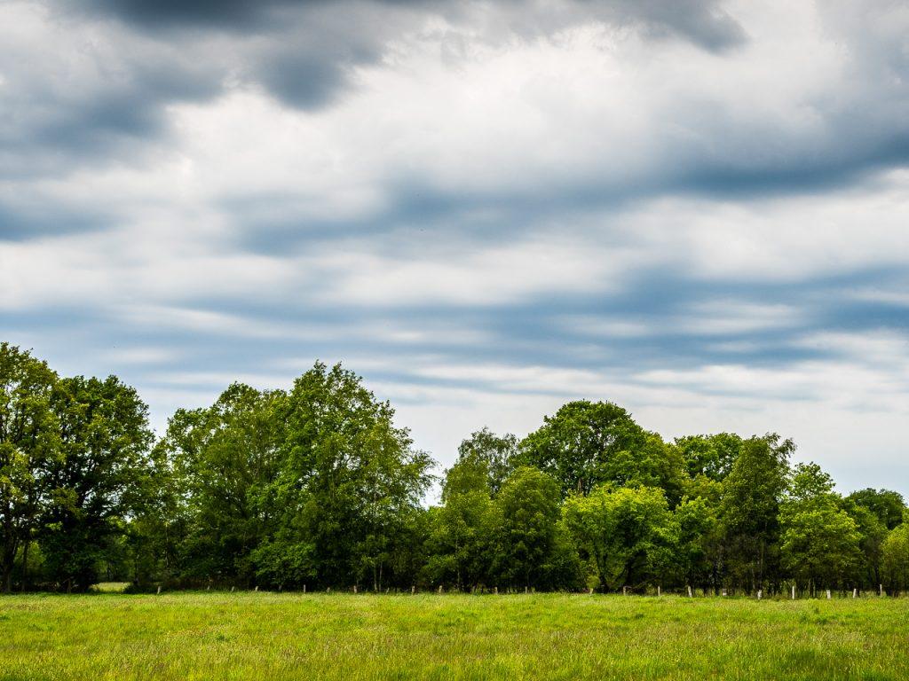 Wittmoor Hamburg, bedrohlich dunkle Wolken über dem Wald