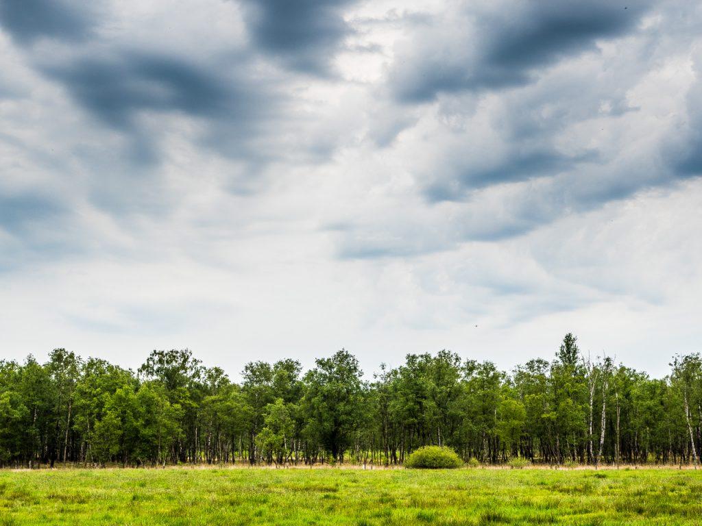 Wittmoor, Hamburg, Birken und andere Bäume unter bedrohlich dunklen Wolken