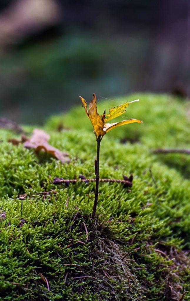 kleiner Baumsprössling im Gegenlicht