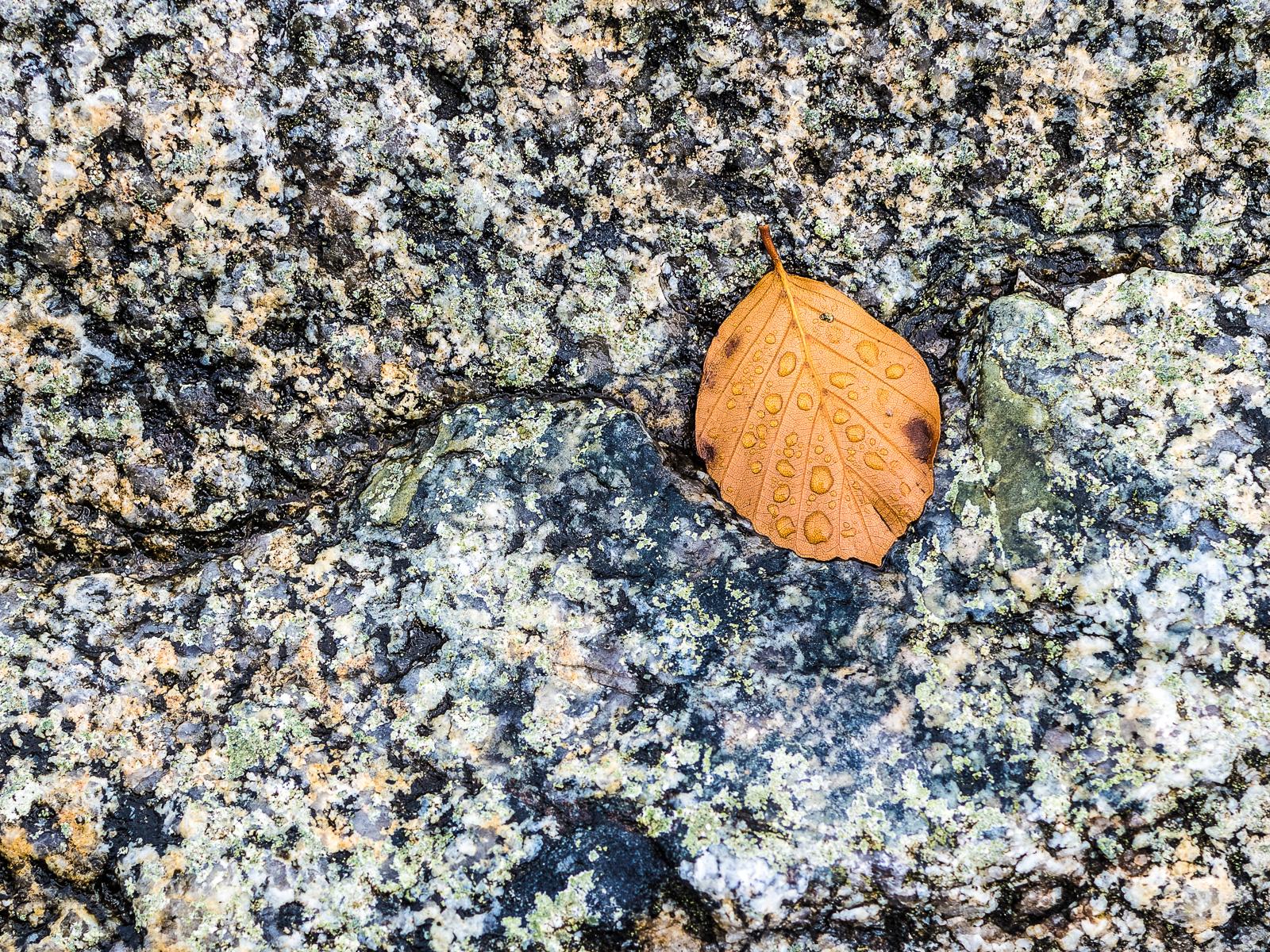 Ein nasses Blatt auf einem Felsen
