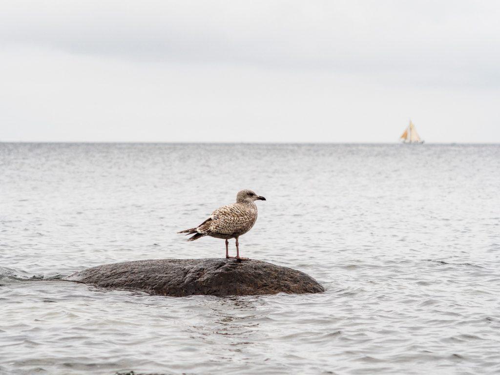 Möwe auf Stein im Wasser, Segelboot im unscharfen Hintergrund
