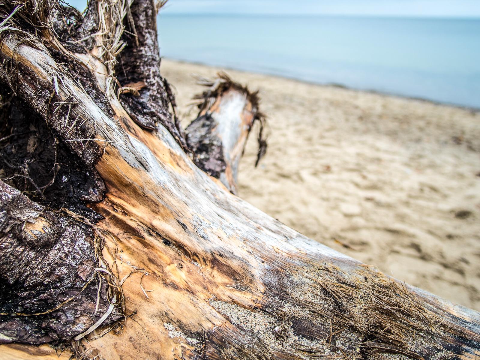 Ausgefaserte Baumwurzel im Sand