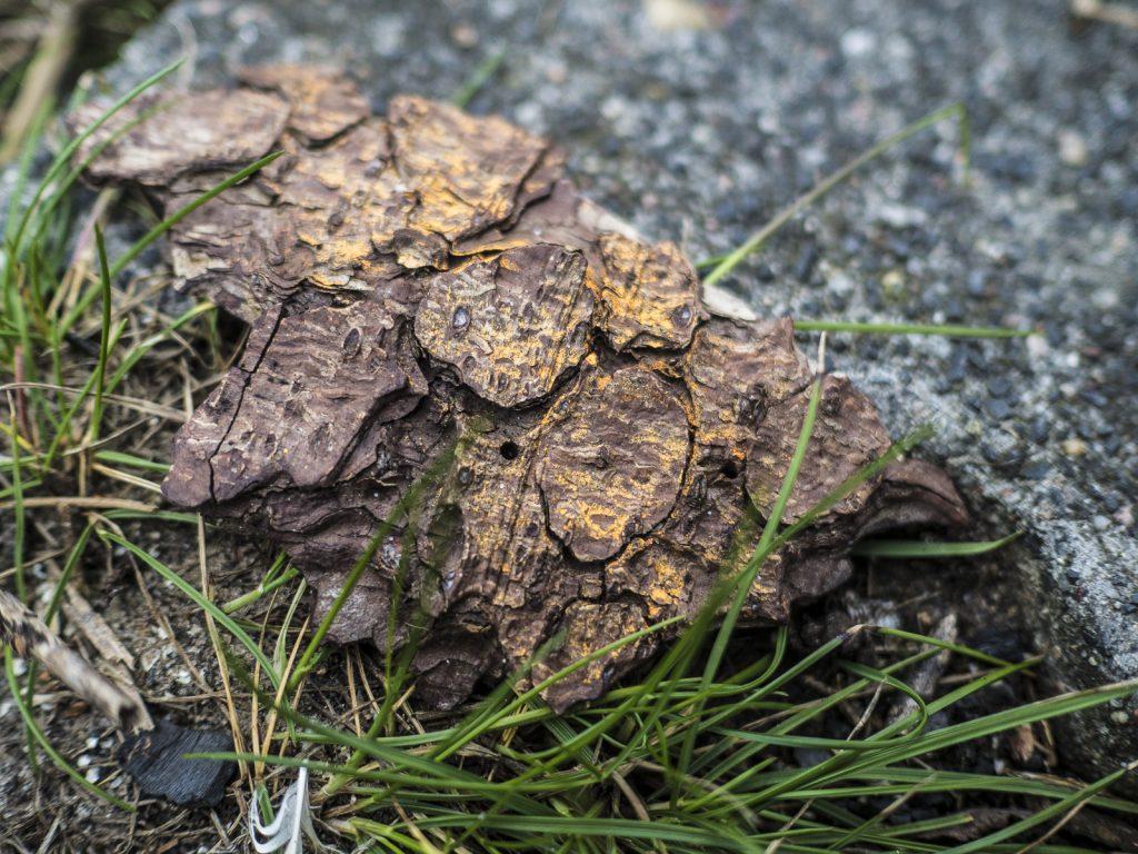 Stück Rinde mit orangefarbener Markierung im Gras