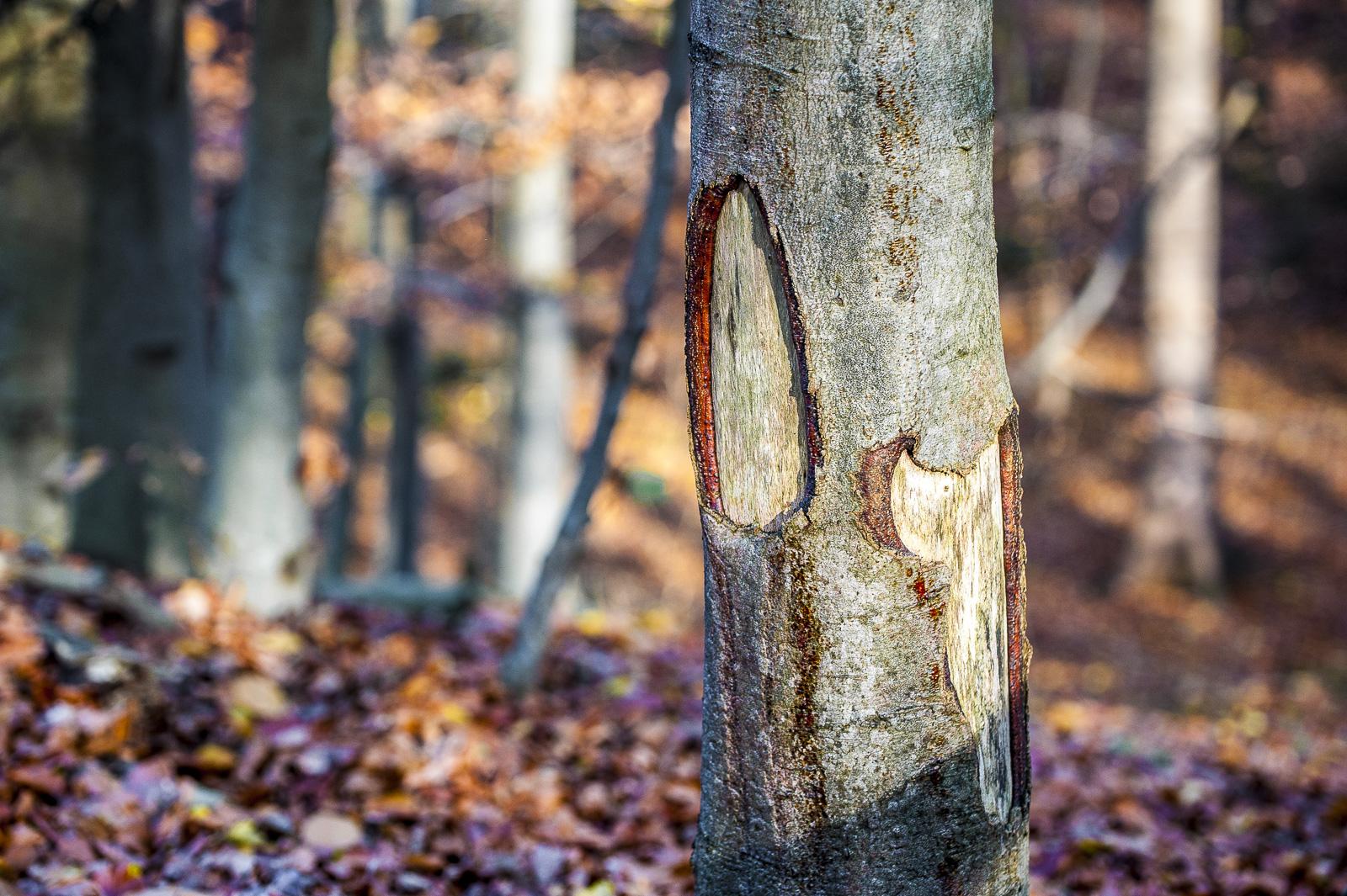 Baumstamm mit tiefen Löchern in der Rinde