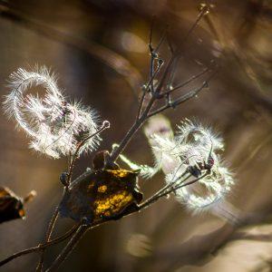 fedrig-haarige Zweige im Gegenlicht