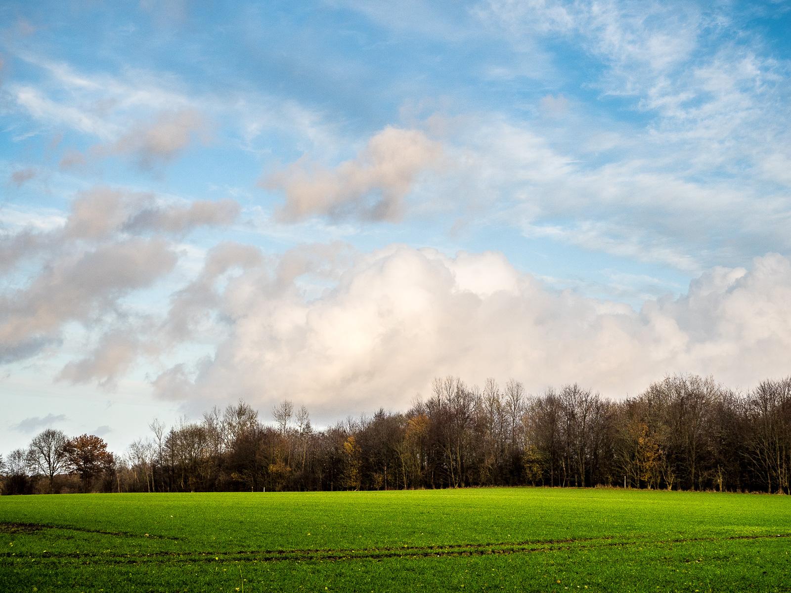 Wolken über dem Wald, darüber blauer Himmel