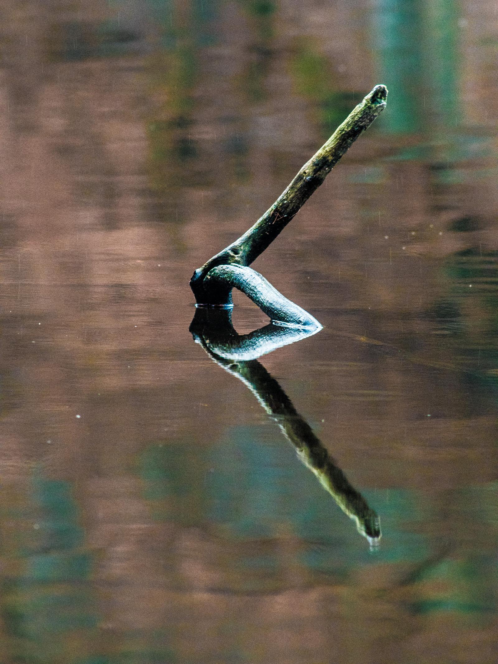 Ast mit Spiegelung im Manhagener Teich