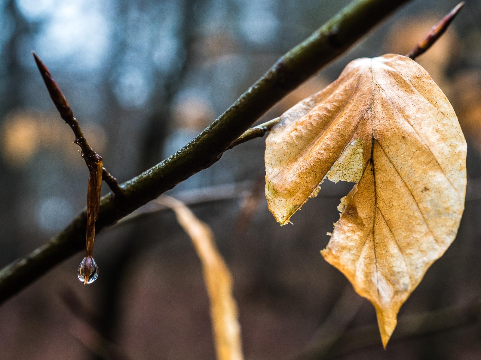 Ein angenagtes Blatt und ein Regentropfen