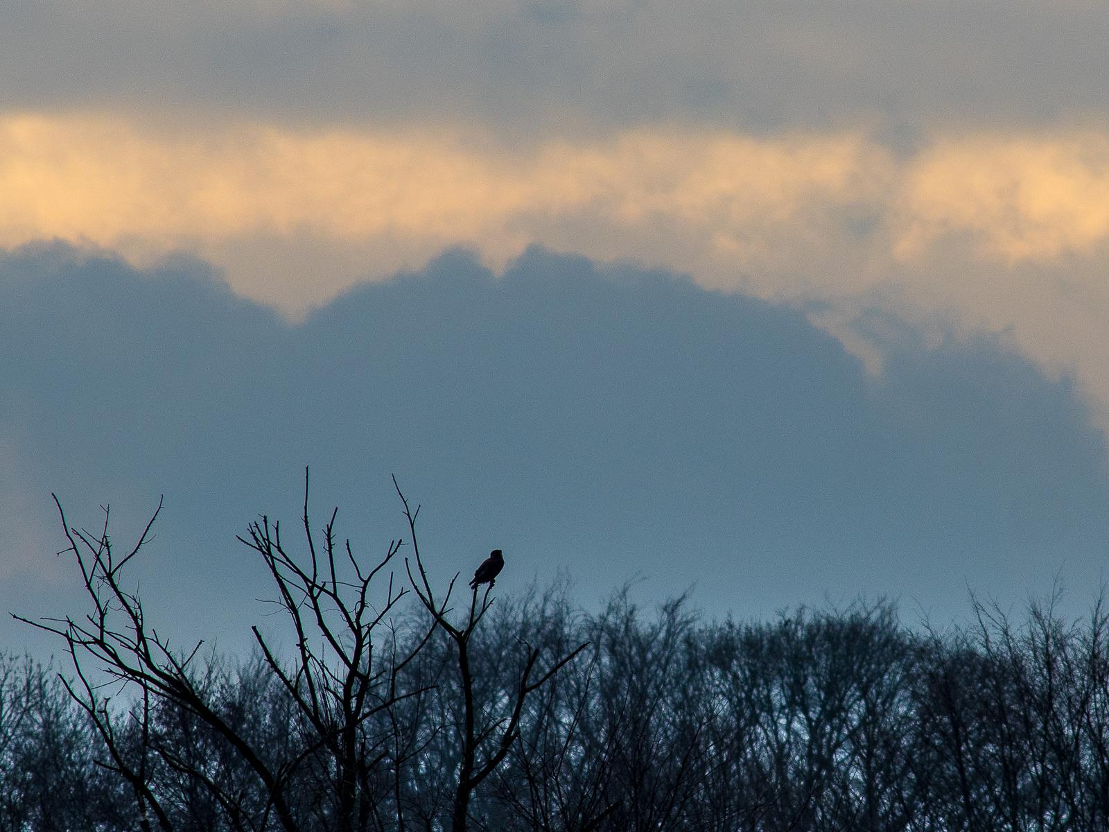 EIn Habicht o.ä. als Silhouette vor Wolkenhimmel