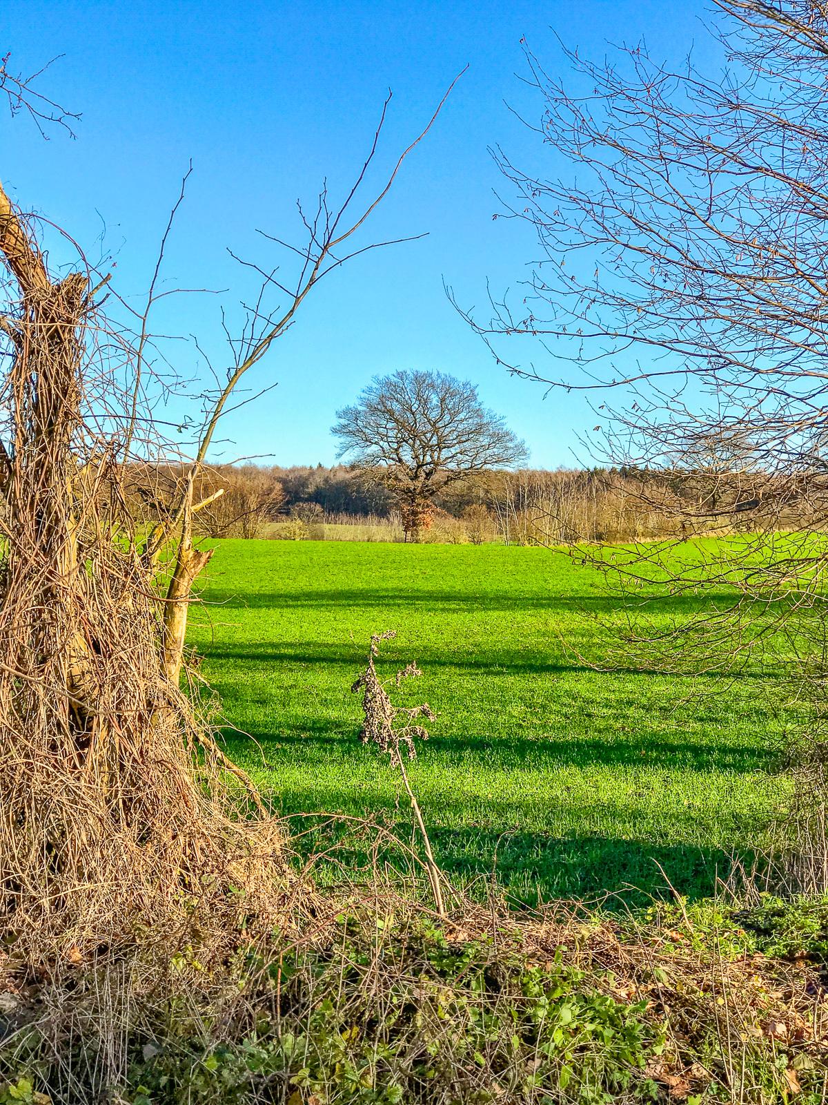 Einzelner Baum auf dem Feld, von Büschen im Vordergrund eingerahmt
