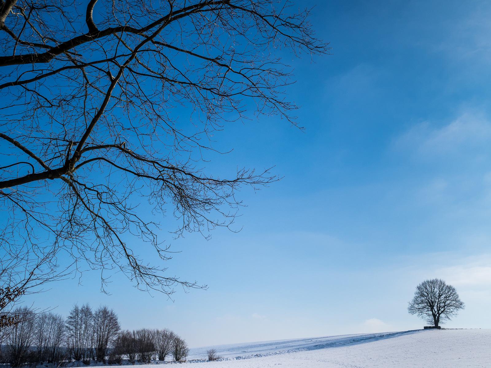 Kleiner Baum auf verschneitem Hügel unter blauem Himmel