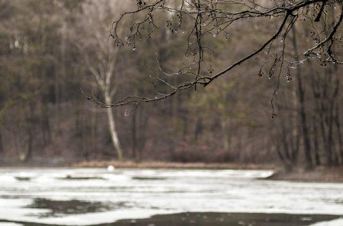 Teich im Park Manhagen, Reste der Eisdecke