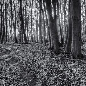 Wald am Ostseeküstenradweg an der Lübecker Bucht
