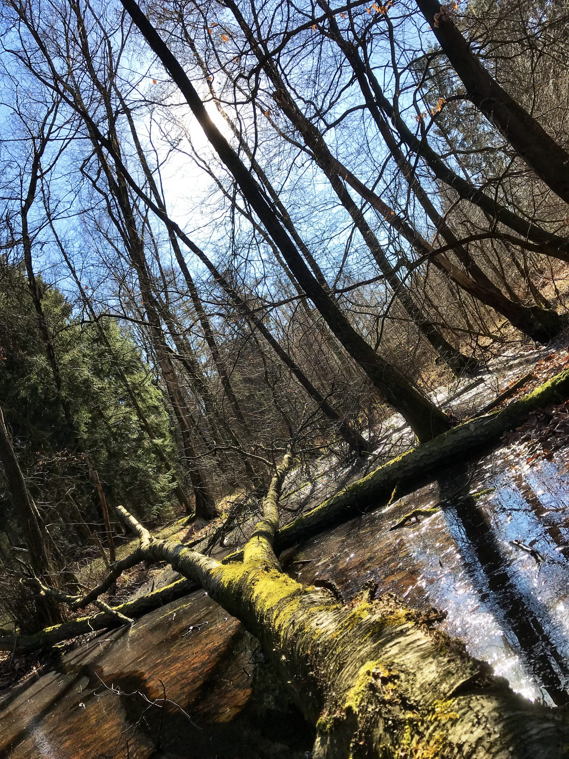 Im Frühling an einem Tümpel in unserem Wald
