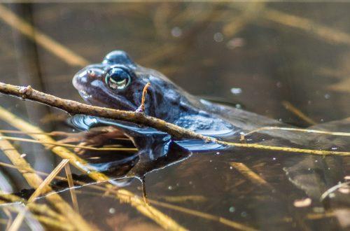der erste Frosch der Saison