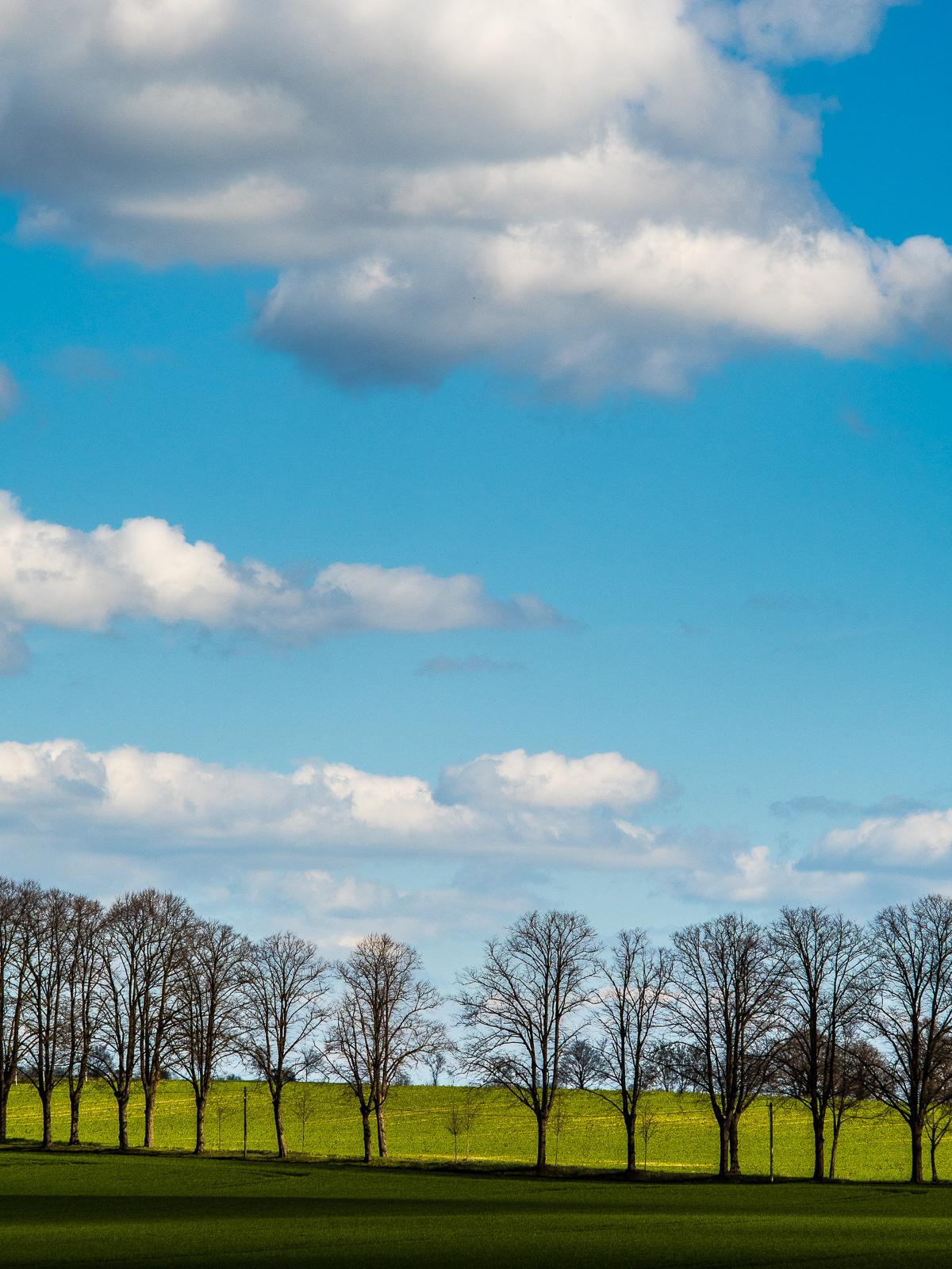 Baumreihe in grünem Feld, blauer Himmel mit Schäfchenwolken darüber