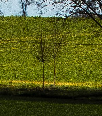 Detailansicht der gelben Bereiche im Bild
