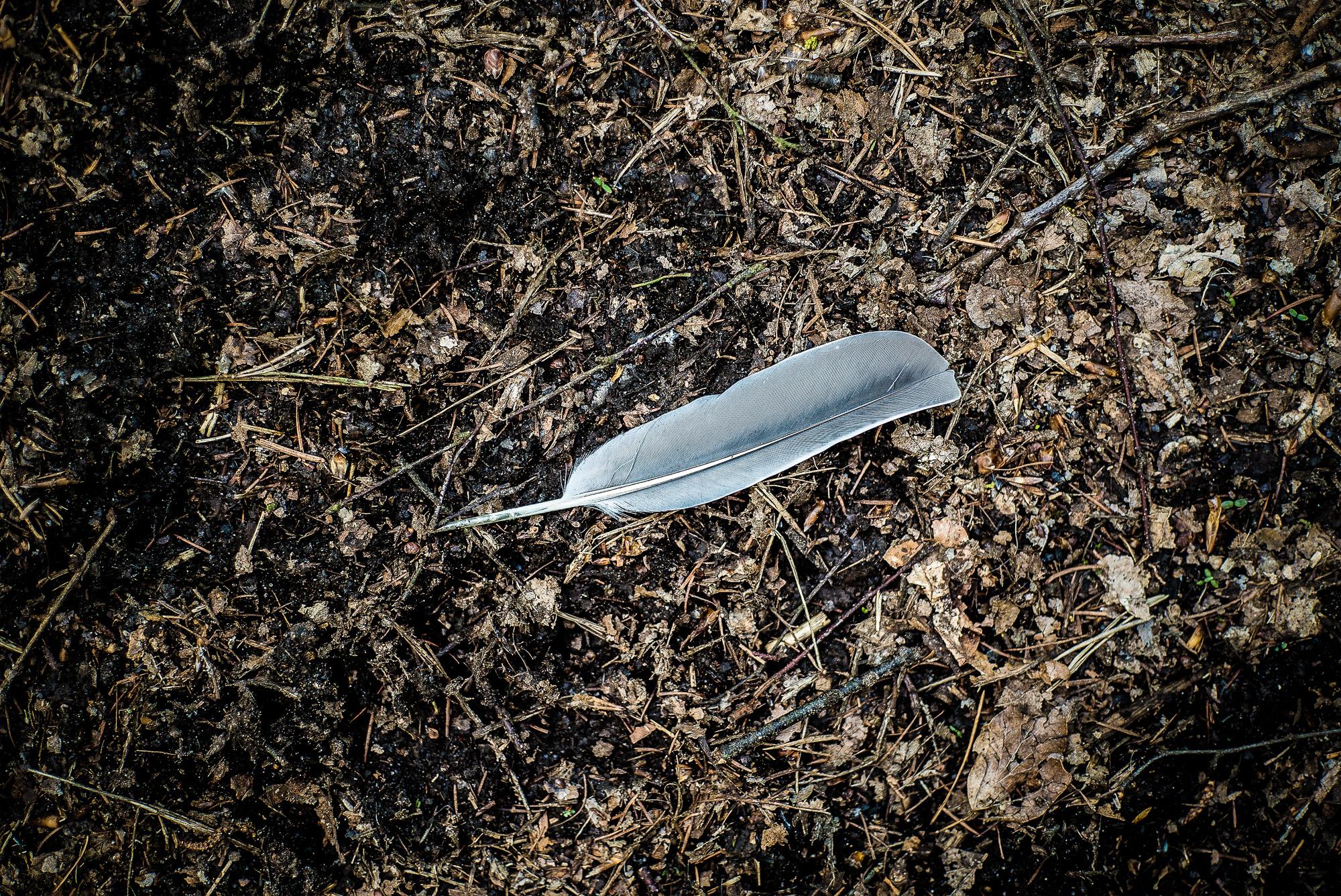 einzelne Feder auf dem Waldboden in kontrastreicher Bildbearbeitung