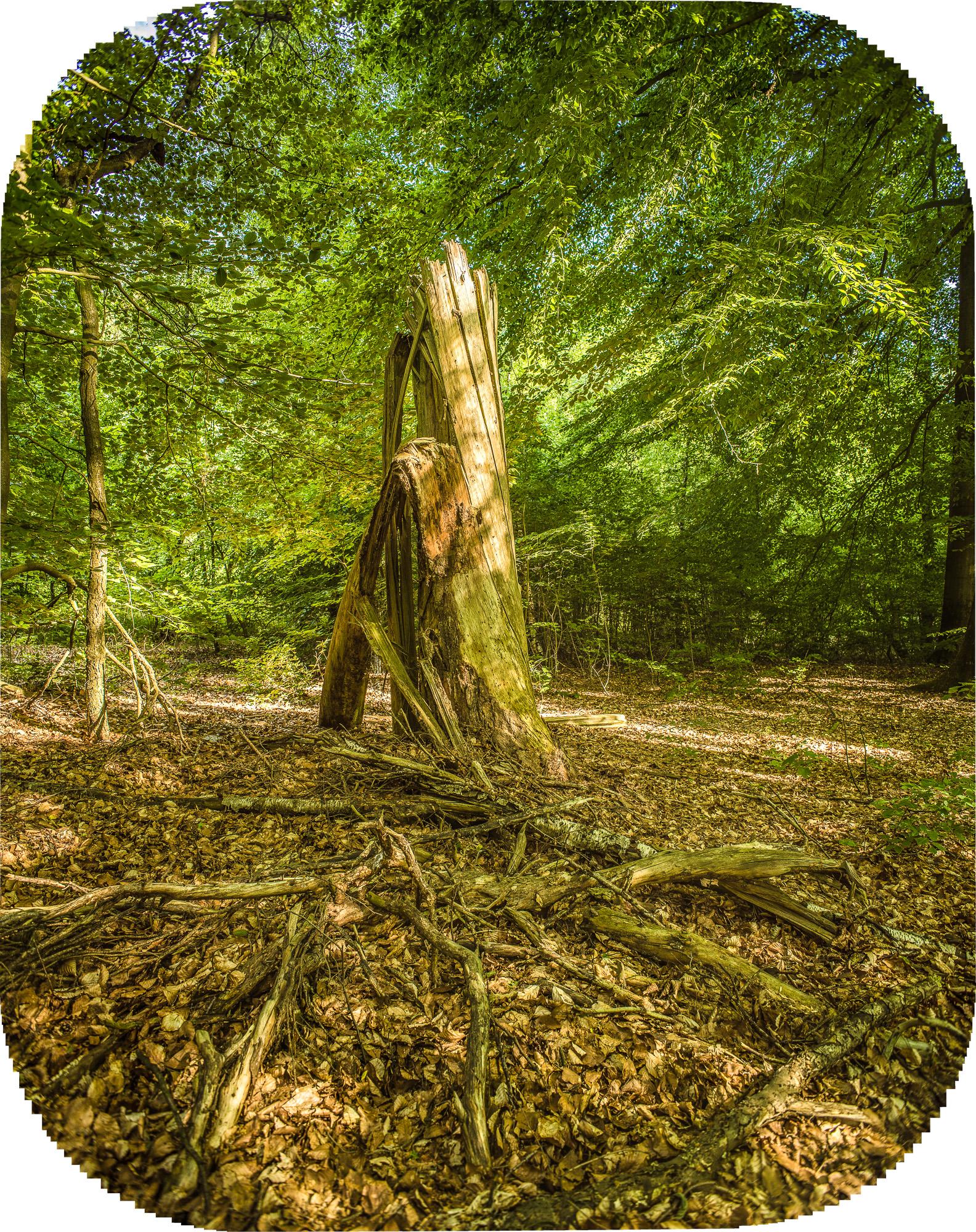 Geknickter Stamm im Wald, zartes Abendlicht auf grünem Laub