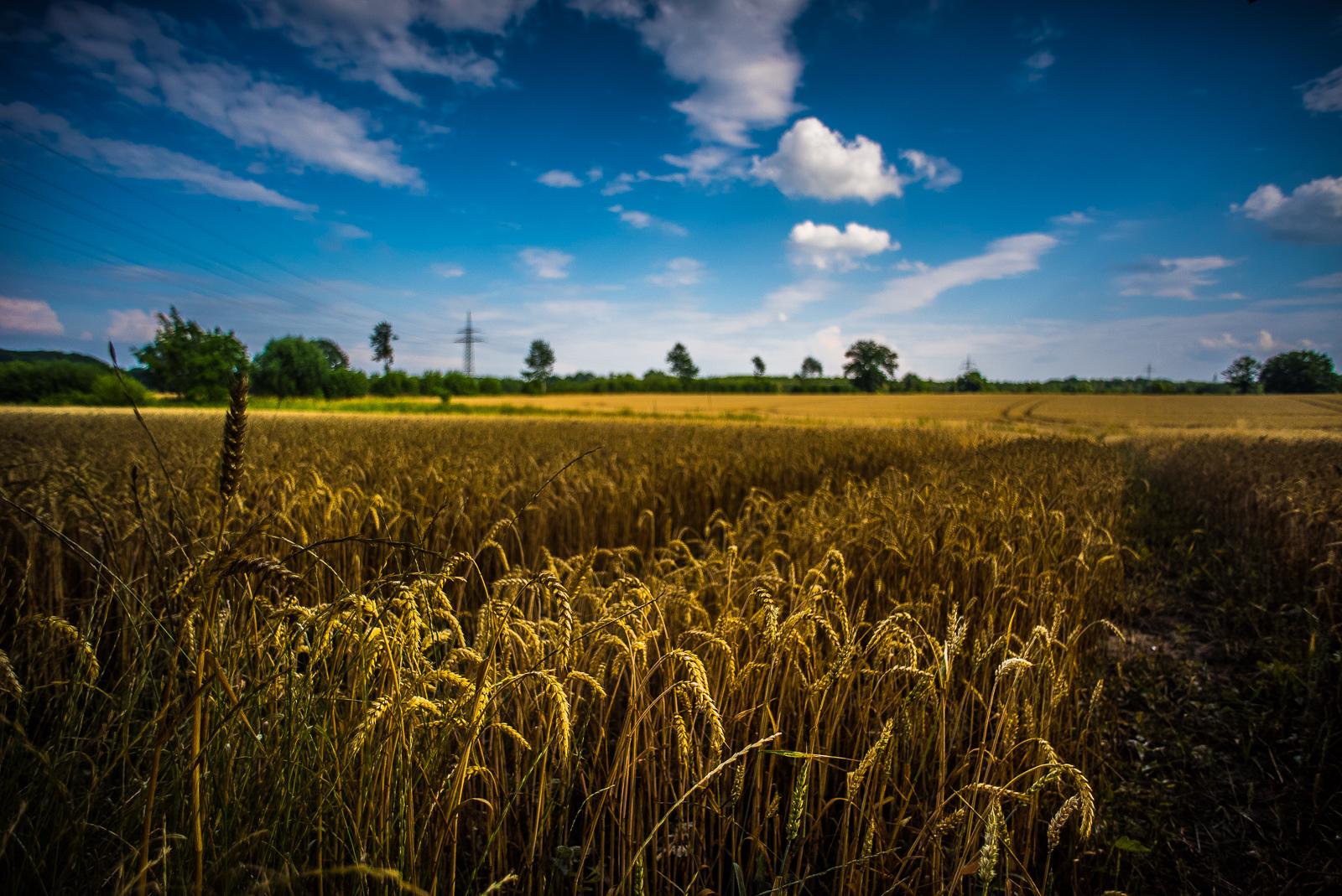 Wolken über einem Getreidefeld