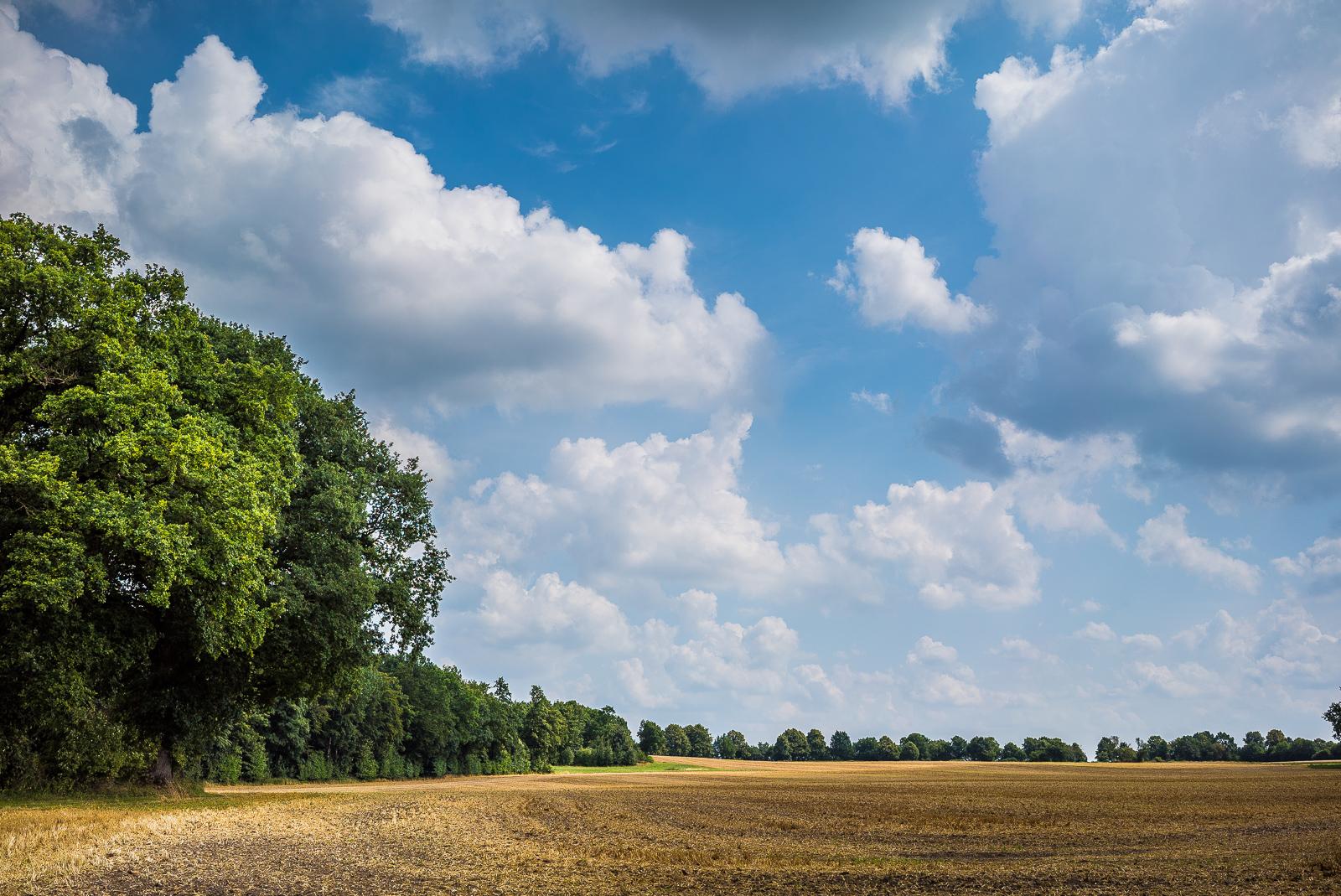 Abgeerntetes Getreidefeld unter üppigen Wolken
