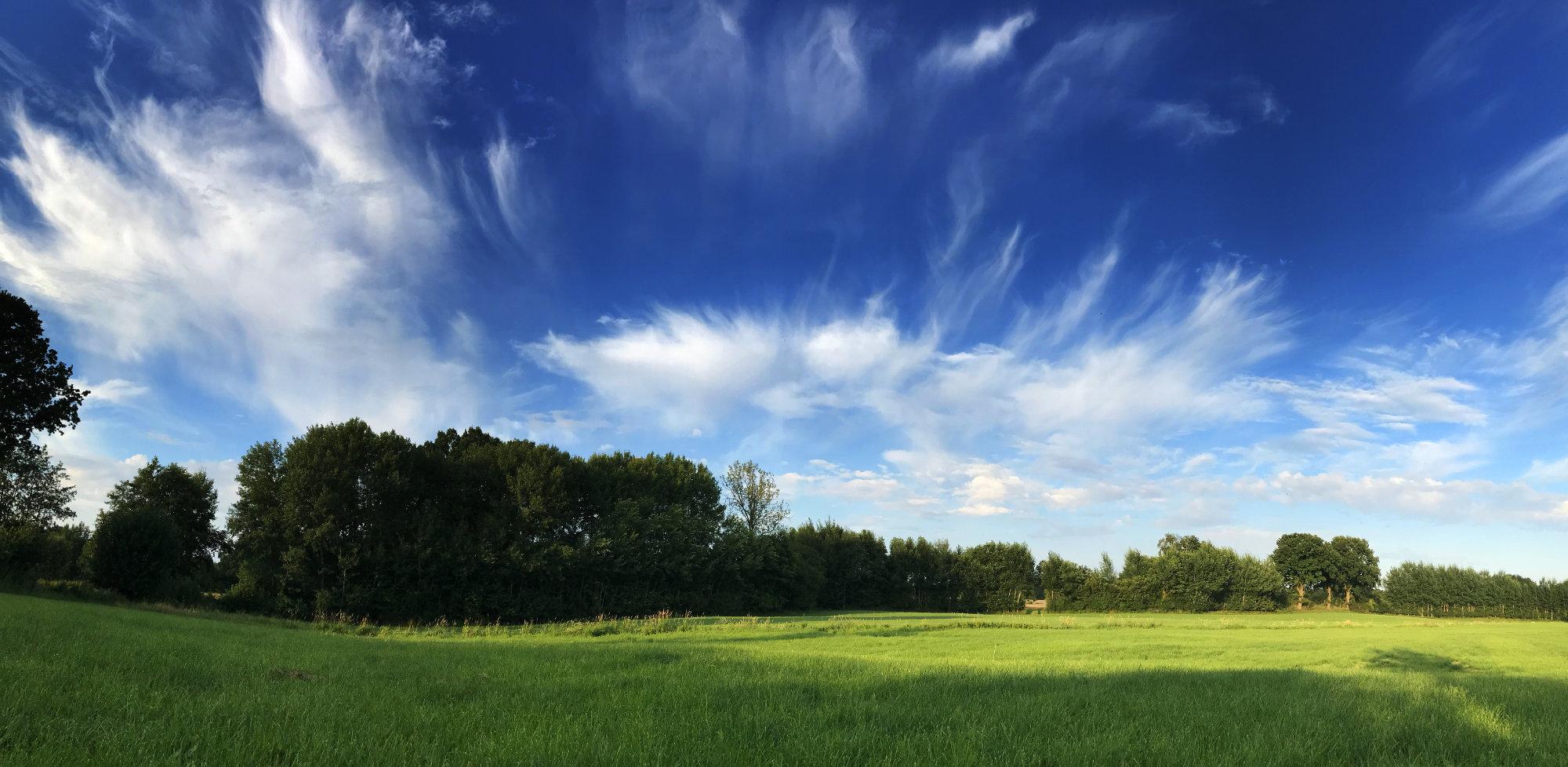 Fedrige Wolken am Abendhimmel über einer Wiese